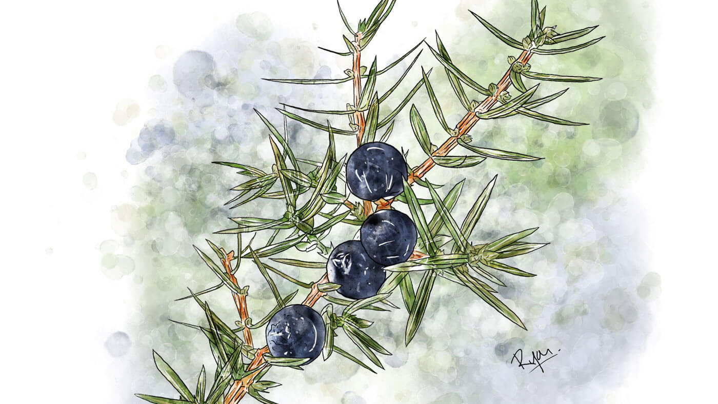 Dr. Andres Herbal Plants Illustrations